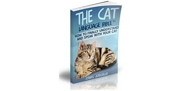 Cat Language, All Best Reviews